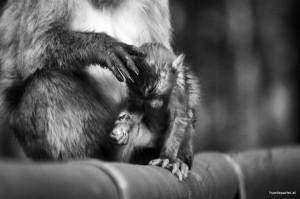 Affen als gefühlvolles Bild zum Welttierschutztag