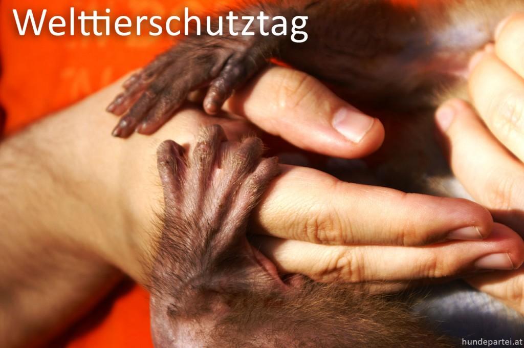 Welttierschutztag Hilfe Tiere