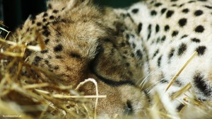 Tier im Zoo Welttierschutztag