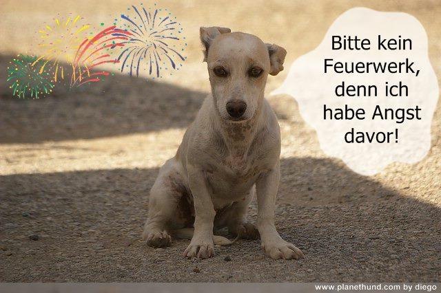 Silvester Feuerwerk Tiere