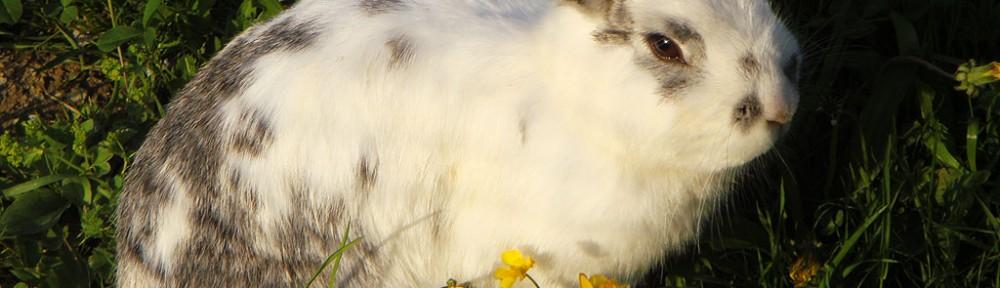 Keine Kaninchen als Ostergeschenk