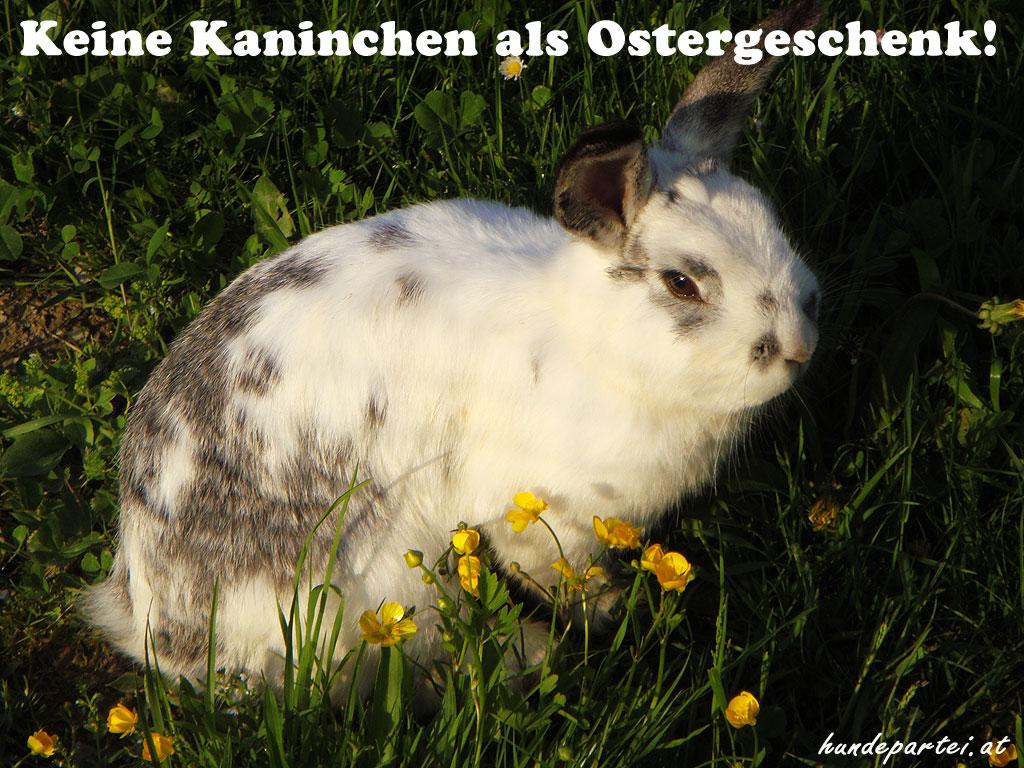 Kaninchen Wiese Vorschriften Haltung