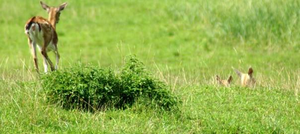 Richtiger Umgang mit gefundenen Wildtieren