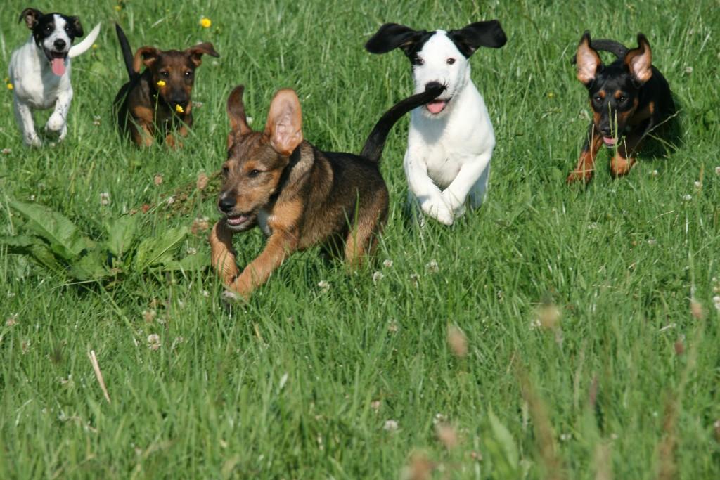 Hundewelpen Vermittlung Pfotenhilfe