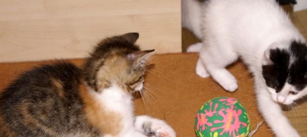 Katzenkastrationskampagne: Kastrationspflicht von Katzen in Österreich