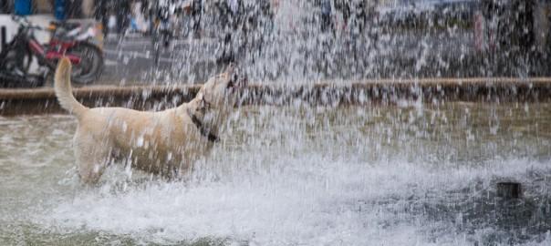 Gefahr bei sommerliche Hitze für Tiere