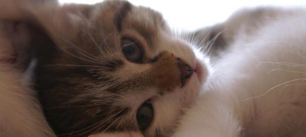 Streunerkatzen im Winter helfen
