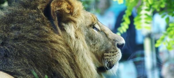 Zoo: Was wäre wenn sich Tiere gegen Menschen auflehnen?