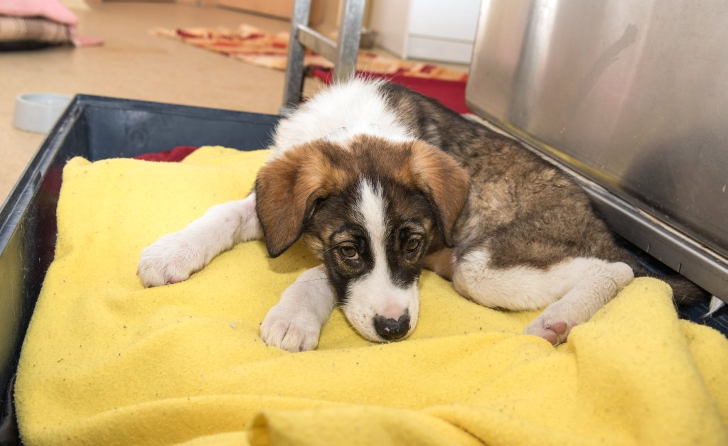 Tierschutzverein: Hände weg von Zuchttieren solange Tiere im Tierheim auf ein neues Zuhause warten