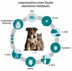 Zeckenzeit: Gefahr für Hunde durch Zecken vom Frühling bis Herbst