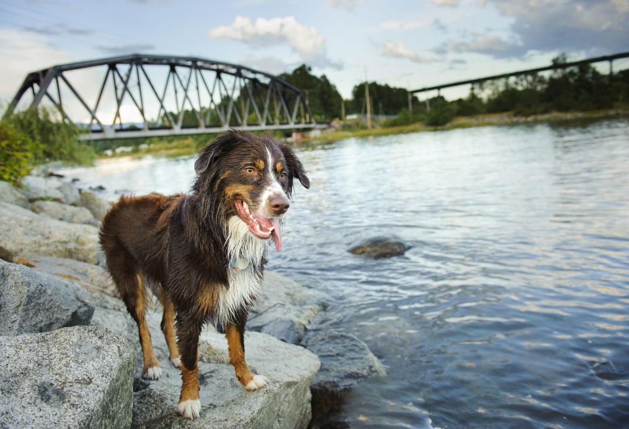 Wien Baden Hund