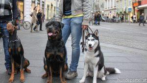 Nationalratswahl Österreich Parteien Tierschutz