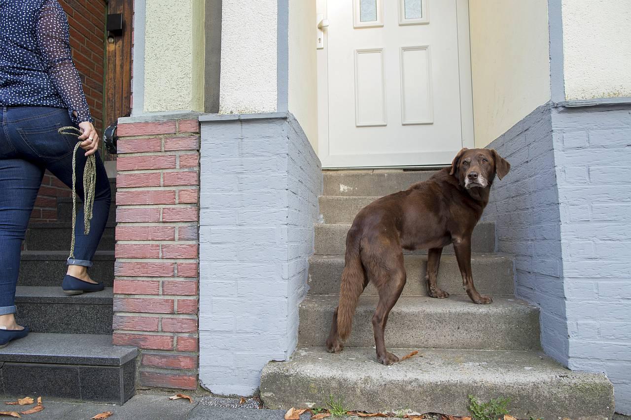 Altersbedingte Krankheiten beim Hund
