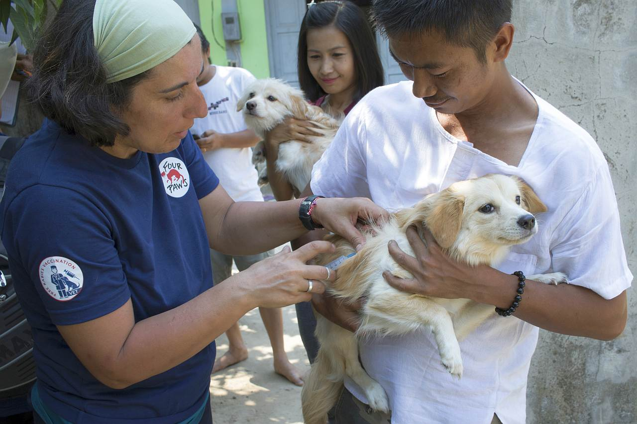 Streunerhunde Myanmar Tollwut Impfung