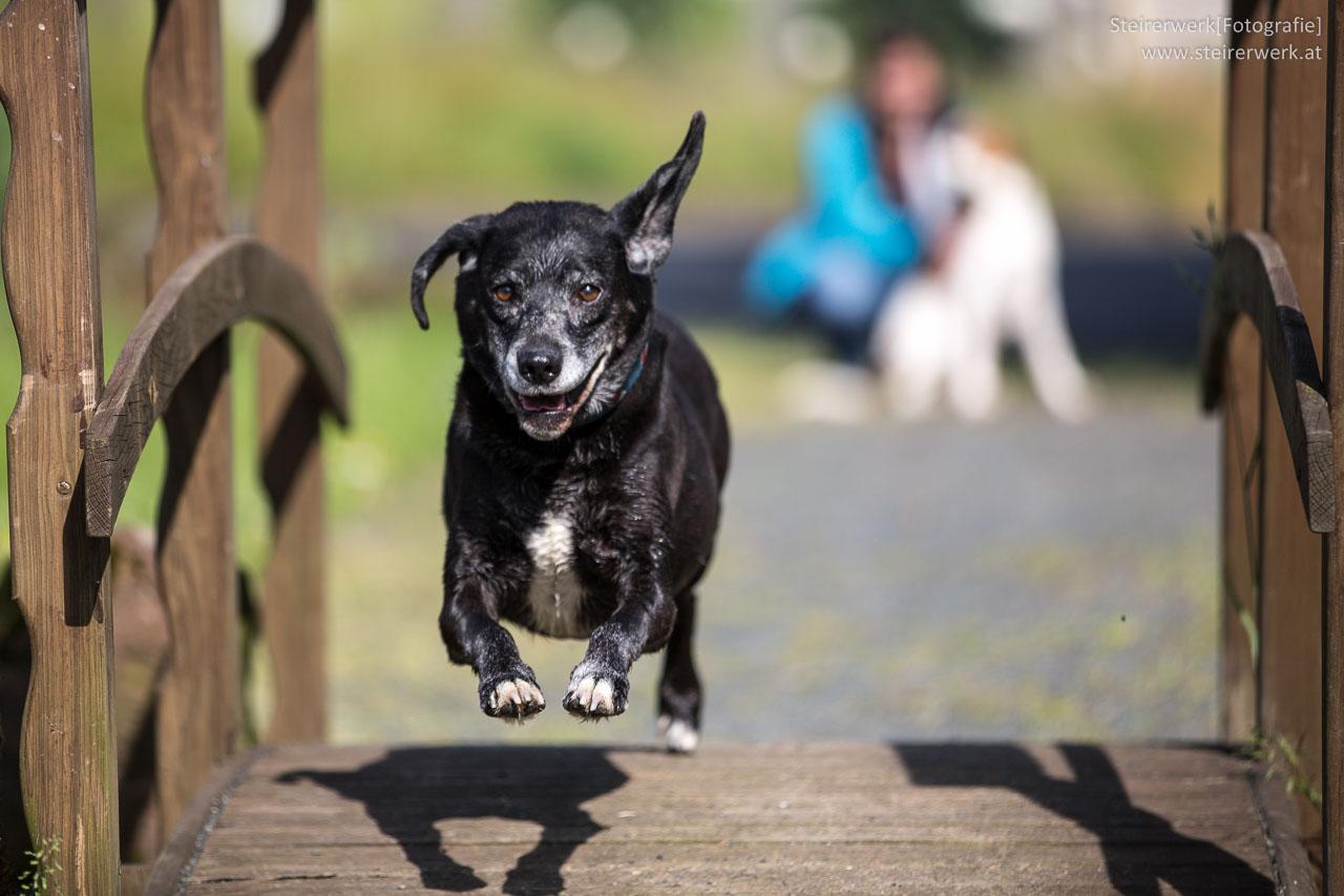 Tierhalterhaftpflicht Versicherung