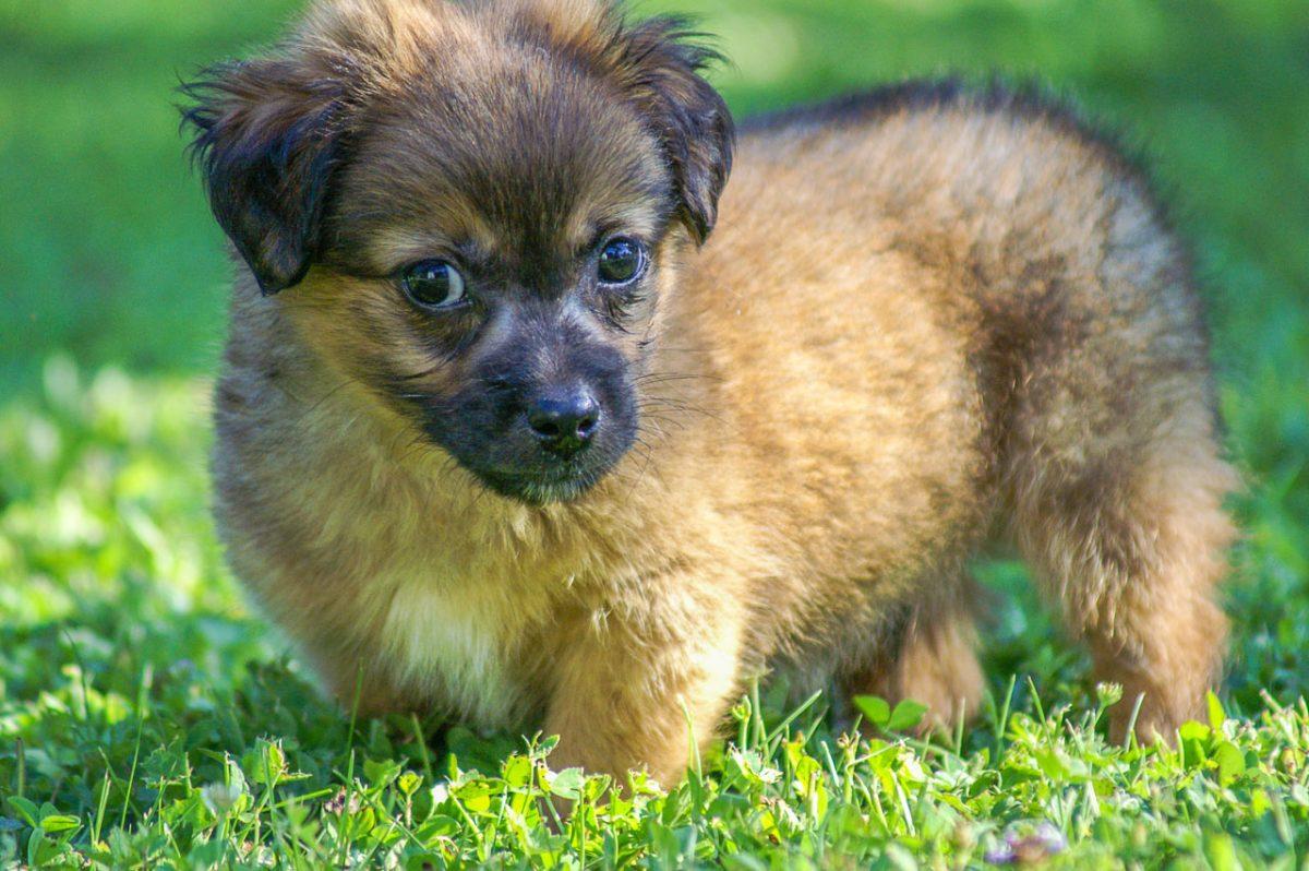 Online-Plattform bazos.at schließt Handel mit Hunden & Katzen