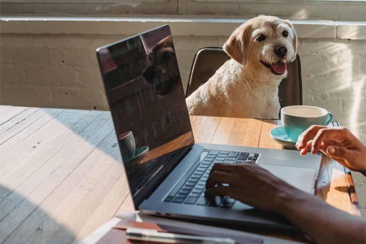 DeineTierwelt führt Verifizierungspflicht für Anbieter von Hunden ein